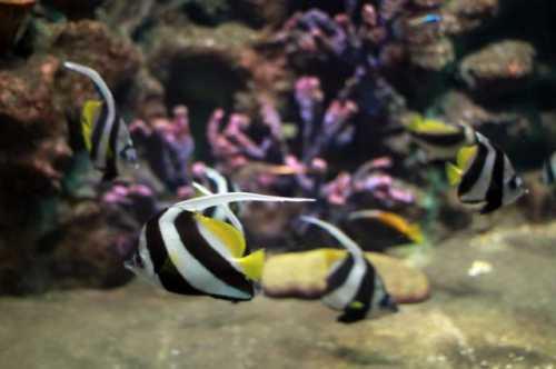 аквариум анталии экскурсии в турции: описание и программа экскурсии, фото